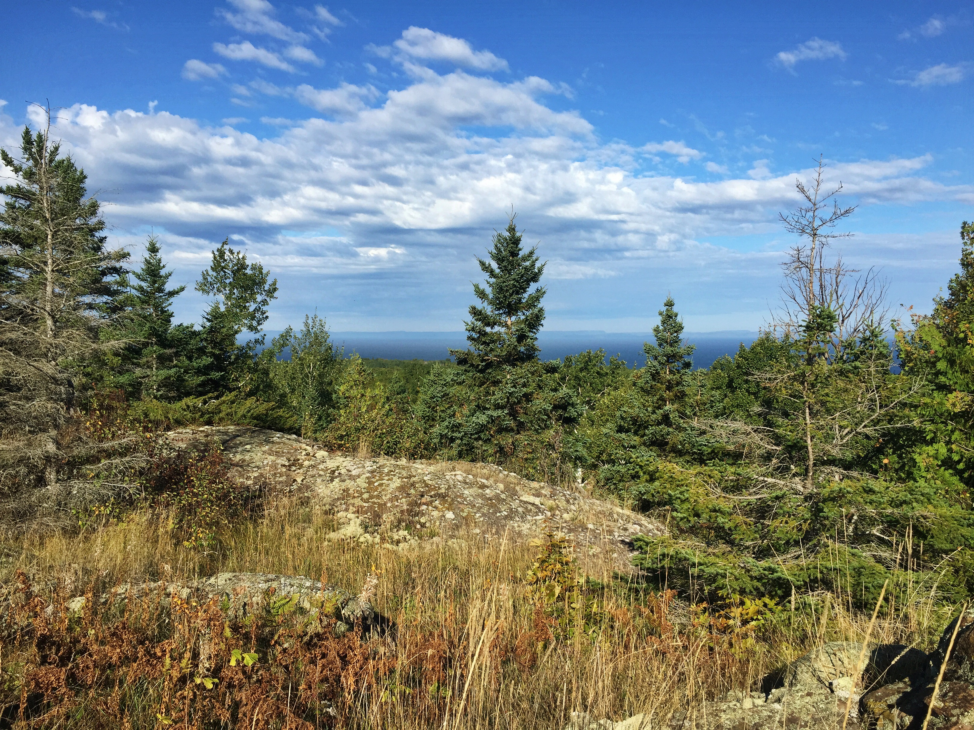 View from a rocky ridge over a mixed evergreen and hardwood forest
