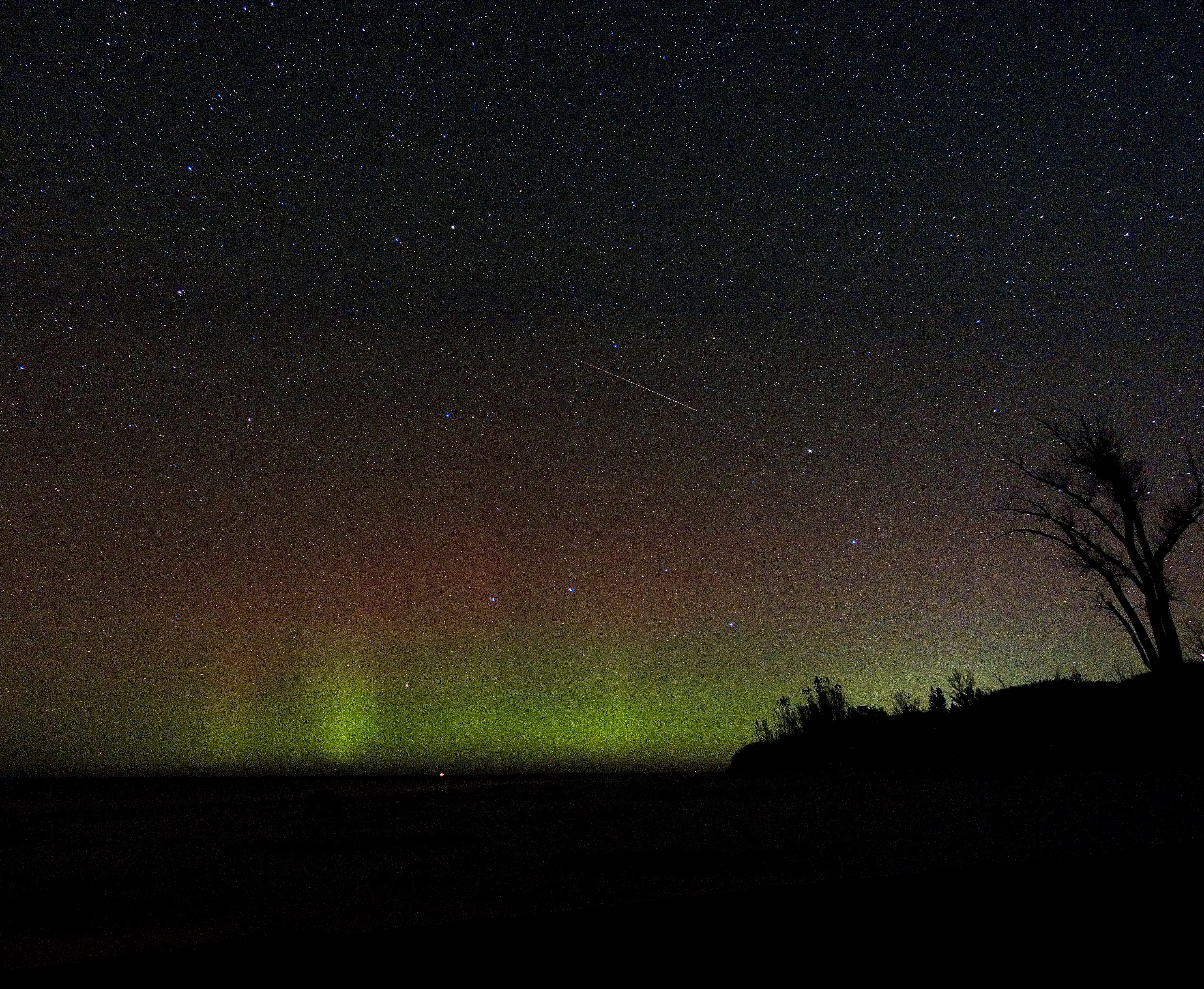 Green aurora borealis under a starry sky with a tree silhouetted on the right